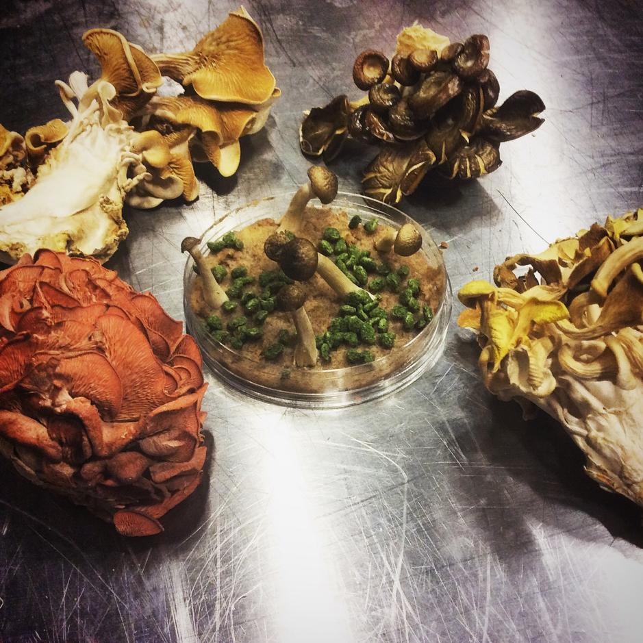 Artful assortment of various mushrooms
