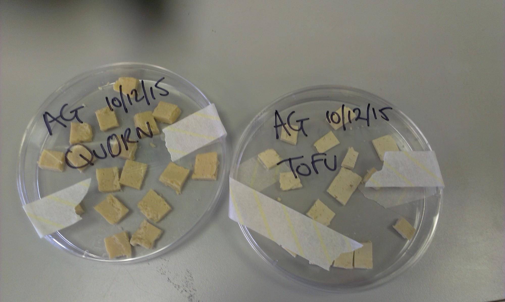 """2 filled petri dishes, one that is labled """"AG 10/12/15 QUORN"""" and the other """"AG 10/12/15 TOFU"""""""
