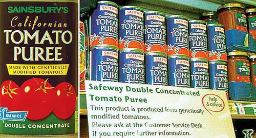 Vintage picture of tomato puree cans on the shelf with a notice saying the tomatos are genetically modifies