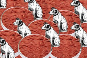 Cultured Pet Food at Because Animals