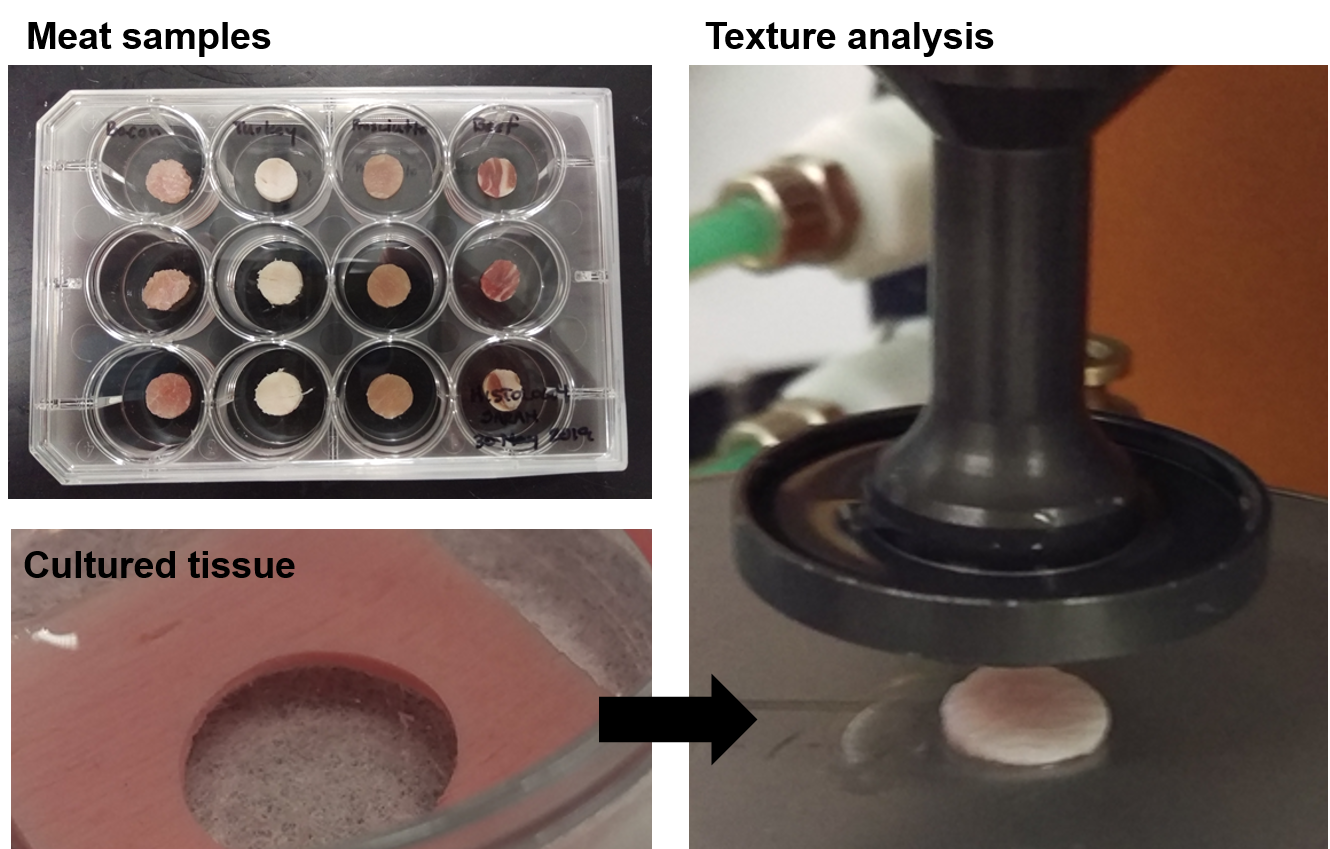 meat and cultured meat texture analysis