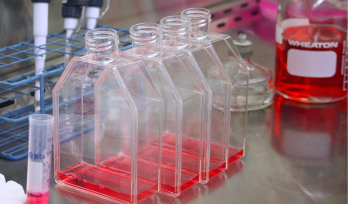 cell culture flasks with turkey growth media