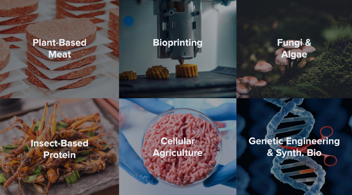 approaches to alternative protein