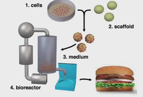 process of making cultured meat