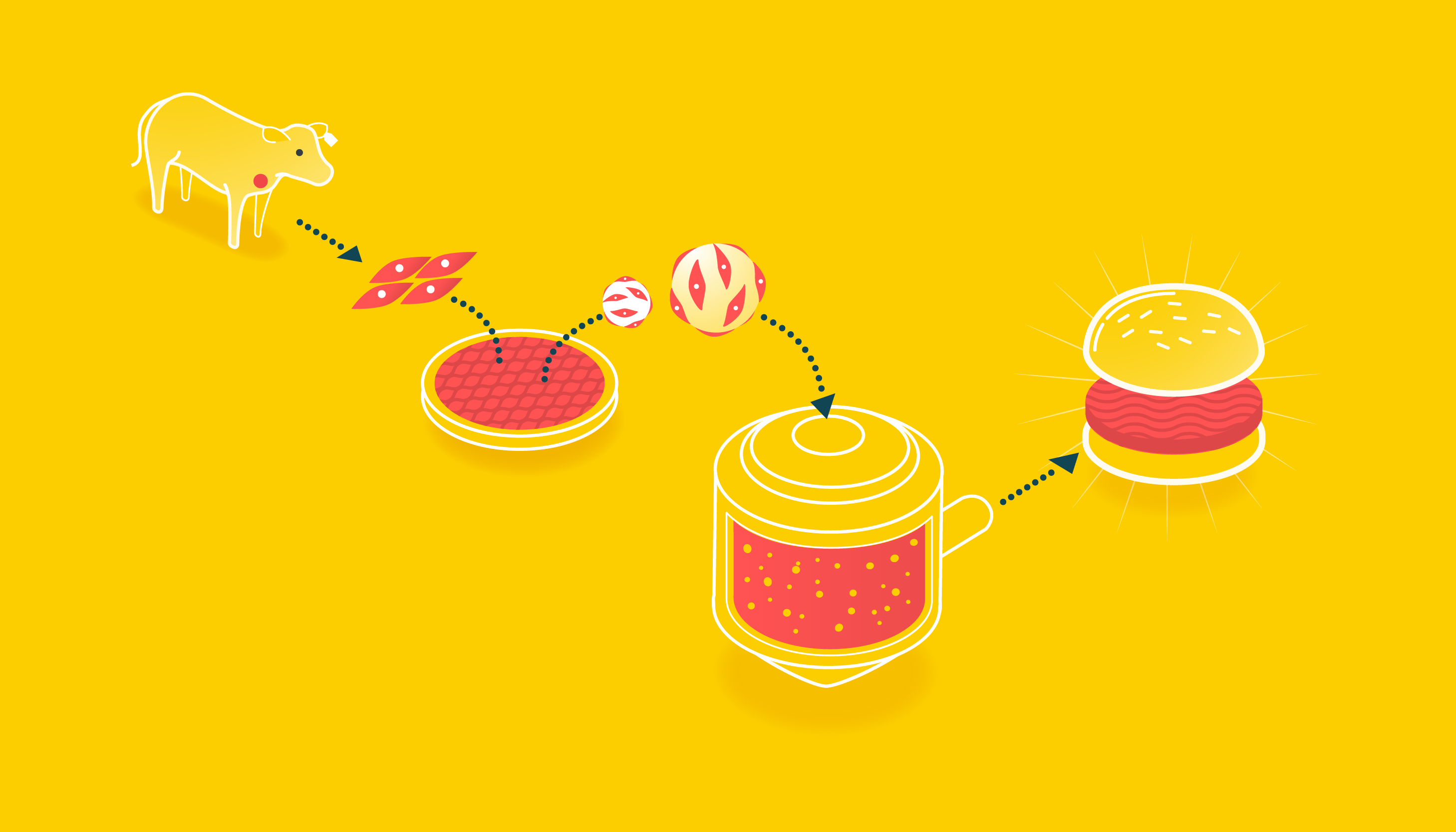 diagram of cell cultured hamburger production