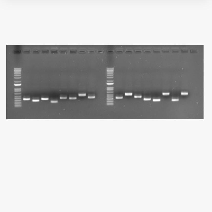 DNA gel of fish growth factors