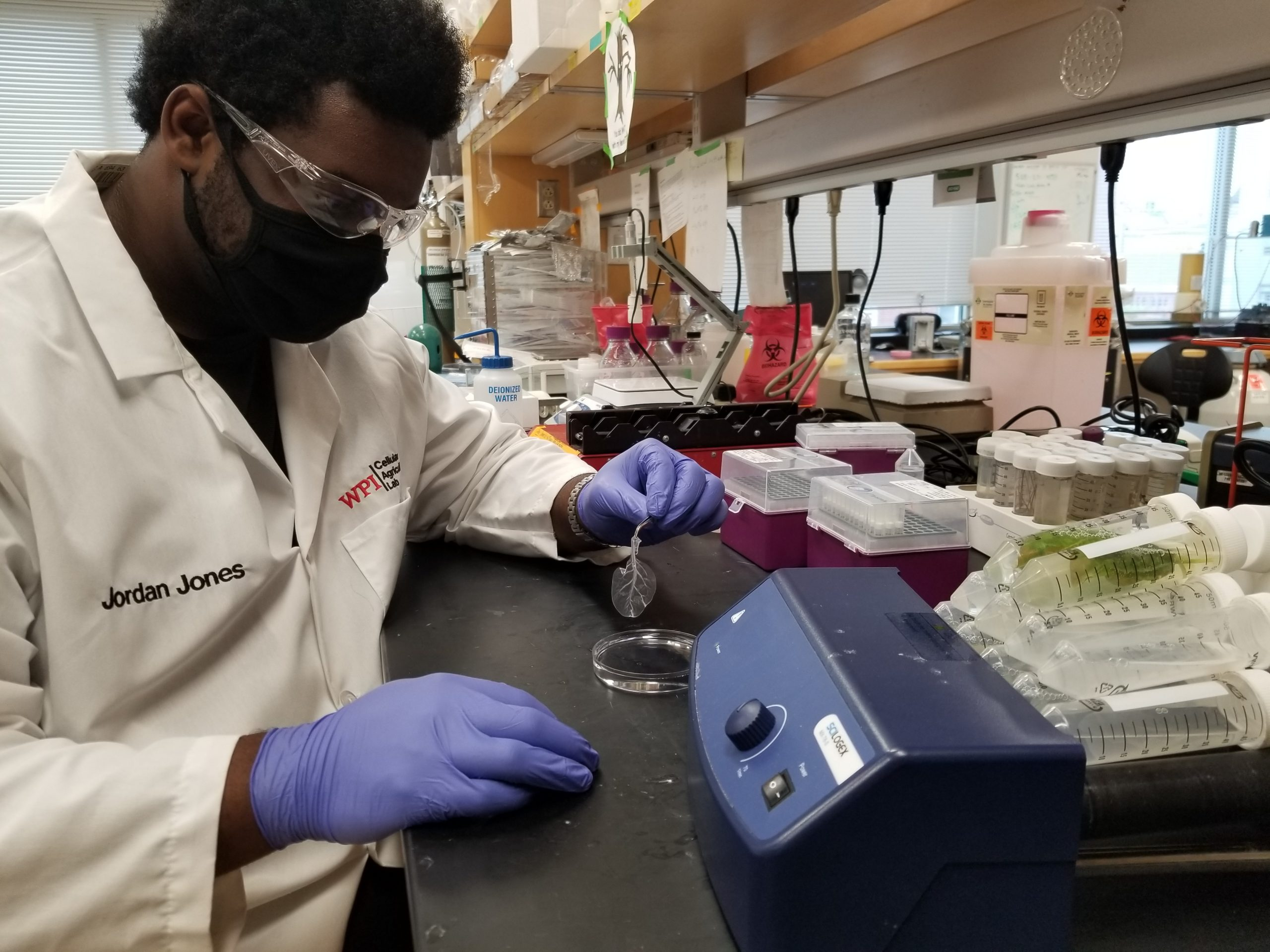 Jordan in the lab, holding a decellularized spinach leaf on which he will grow beef cells.