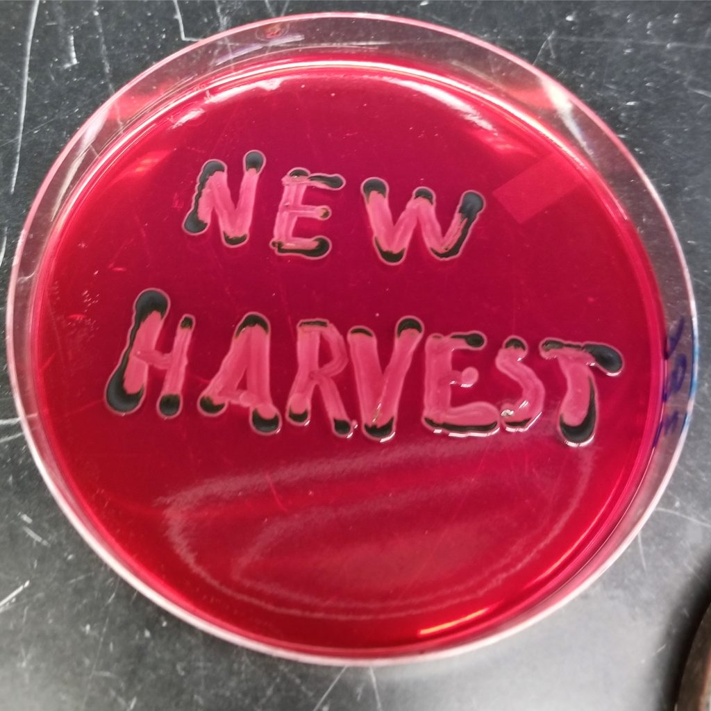 New Harvest written on agar plate